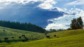 Sirvėtos regioninis parkas 9305