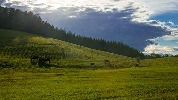 Sirvėtos regioninis parkas 9307