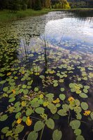 Sirvėtos parkas · Sėtikio ežeras