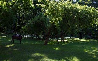 Raudonės pilies parkas 9489