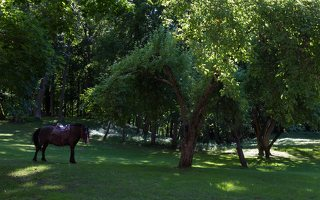 Raudonės pilies parkas 9490