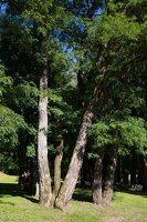 Raudonės pilies parkas 9491