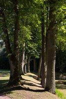 Raudonės pilies parkas, liepų alėja 9495