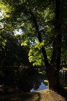 Raudonės pilies parko tvenkinys 9513