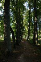 Raudonės pilies parkas · liepų alėja 9521