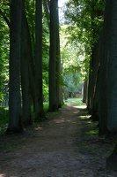 Raudonės pilies parkas · liepų alėja 9523