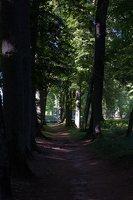 Raudonės pilies parkas · liepų alėja 9524