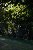 Gelgaudiškio dvaro parkas 9542