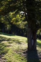 Gelgaudiškio dvaro parkas 9544