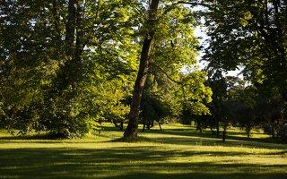 Gelgaudiškio dvaro parkas 9545