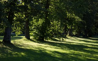 Gelgaudiškio dvaro parkas 9547