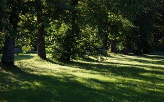 Gelgaudiškio dvaro parkas 9548