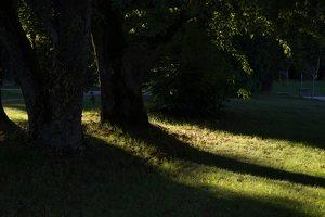 Gelgaudiškio dvaro parkas 9552