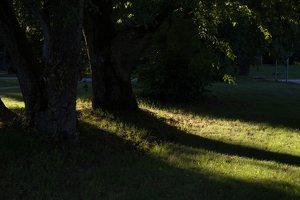 Gelgaudiškio dvaro parkas 9555