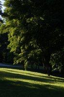 Gelgaudiškio dvaro parkas 9561
