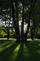 Gelgaudiškio dvaro parkas 9564
