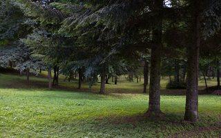 Trakų Vokė · Andrė parkas 9746