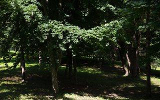 Trakų Vokė · Andrė parkas 9751