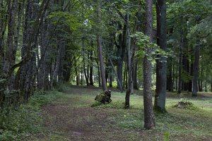 Trakų vokė · Andrė parkas 9784