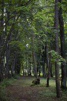 Trakų vokė · Andrė parkas 9786