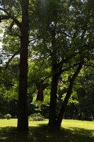 Trakų vokė · Andrė parkas 9788