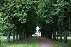 Trakų Vokės dvaro rūmai · liepų alėja 9878