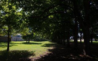 Trakų Vokės dvaro rūmai · liepų alėja 9903