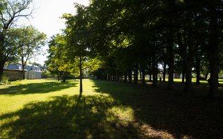 Trakų Vokės dvaro rūmai · liepų alėja 9954