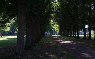 Trakų Vokės dvaro rūmai · liepų alėja 9959