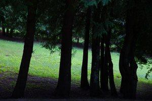 Lentvario dvaras · Andrė parkas 0053