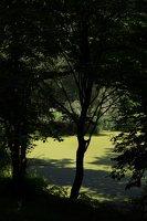 Lentvario dvaras · Andrė parkas, tvenkinys 0154