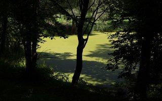 Lentvario dvaras · Andrė parkas, tvenkinys 0155