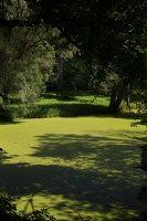 Lentvario dvaras · Andrė parkas, tvenkinys 0157