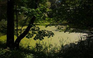 Lentvario dvaras · Andrė parkas, tvenkinys 0160