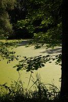 Lentvario dvaras · Andrė parkas, tvenkinys 0161