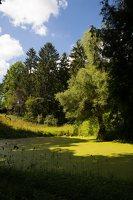 Lentvario dvaras · Andrė parkas, tvenkinys 0165