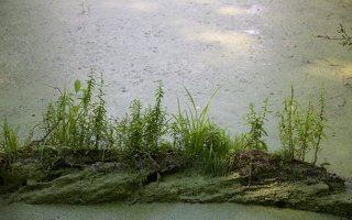 Lentvario dvaras · Andrė parkas, tvenkinys 0171