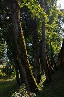 Medininkų pilis · apsauginis griovys 0348