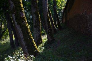 Medininkų pilis · siena, apsauginis griovys 0349