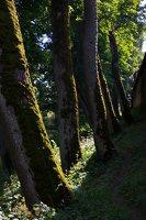 Medininkų pilis · apsauginis griovys 0350