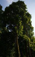 Medininkų pilis · apsauginis griovys 0351
