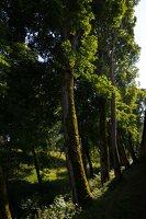 Medininkų pilis · apsauginis griovys 0352
