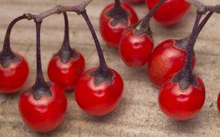 Solanum dulcamara · karklavijas, uogos 0839