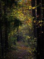 Verkiai · miškas, ruduo P1050835