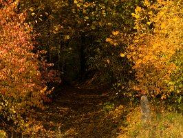 Verkiai · miškas, ruduo P1050836