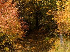 Verkiai · miškas, ruduo P1050837