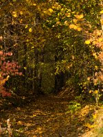 Verkiai · miškas, ruduo P1050838