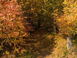 Verkiai · miškas, ruduo P1050839