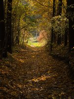 Verkiai · miškas, ruduo P1050840