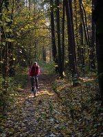 Verkiai · miškas, ruduo P1050841